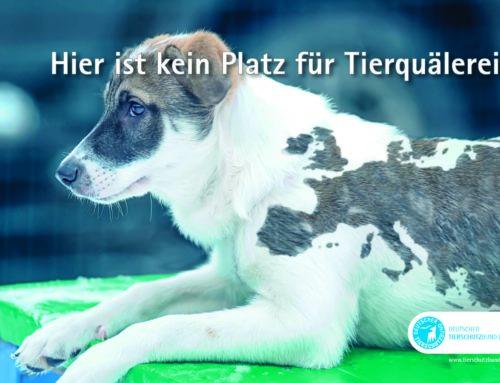 Unterstützung des Deutschen Tierschutzbund E.V.